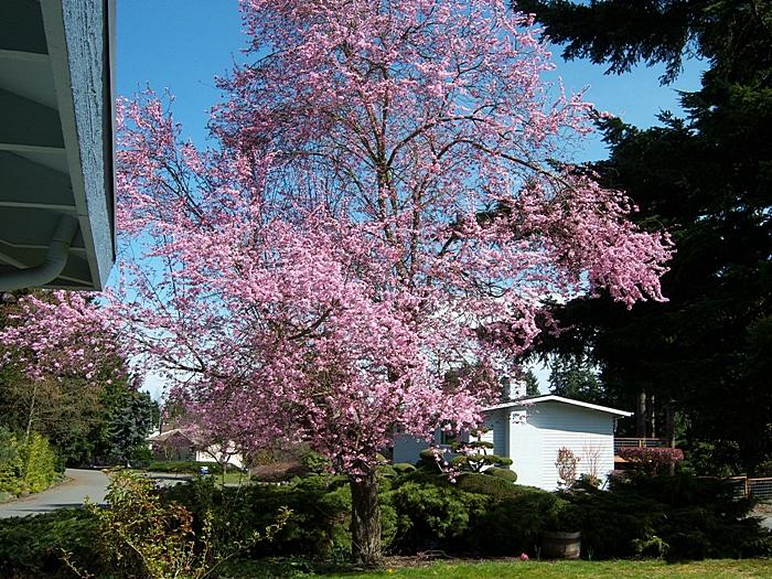 SpringBlooms2012_02