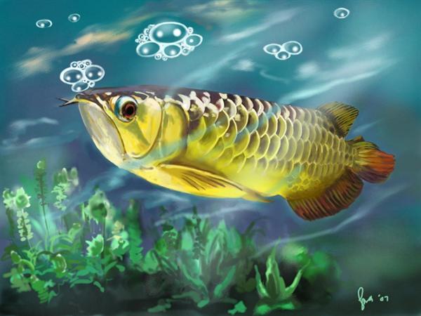 Asian_arowana_gold_fish_600x450