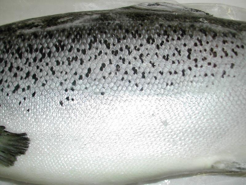 Salmon HG PRM (Skin)