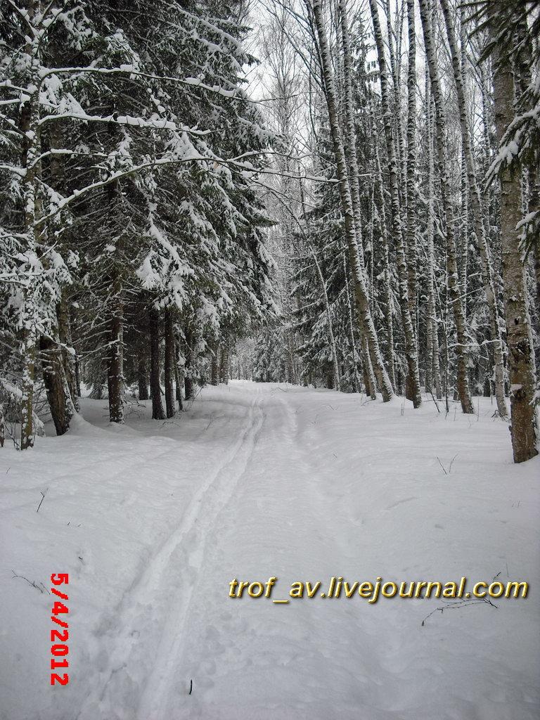 Подмосковный лес. Снегопад 5 апреля 2012 г.