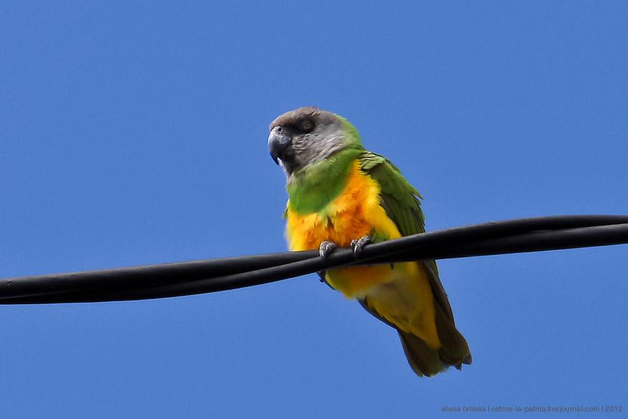 1.папугай-06348